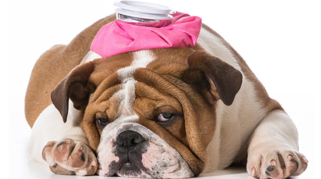 Tips, advice and counseling for Pet Owners