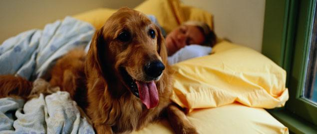 Letting Your Dog Sleep In Your Bed Can Kill You